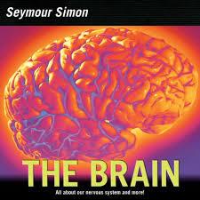 seymour simon the brain